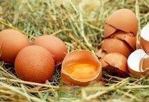 ไข่ดิบ