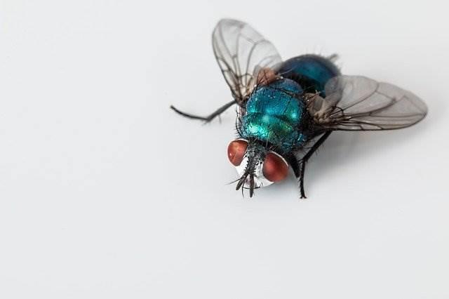 ยาเบื่อแมลงวัน